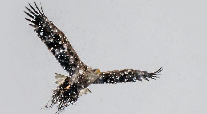 Ørnens dag den 23.2 i Jyllinge