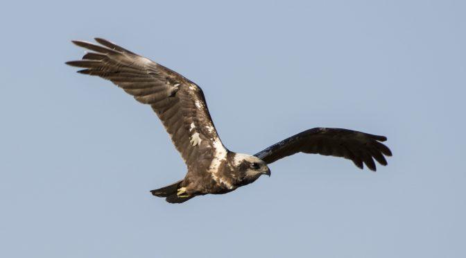 Fugketrækket i september (1)