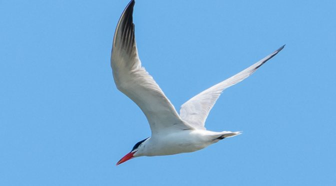 Foredrag om natur- og fugleoplevelser i Ecuador og på Galapagos-øerne
