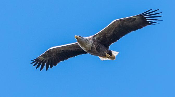 Fugletur til Selsø og Østskov